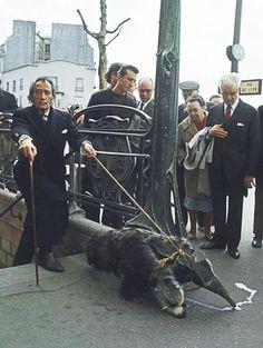 dali, walking his anteater.