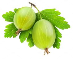 Two green gooseberries on a stem by Fruits+Veggies on Creative Market