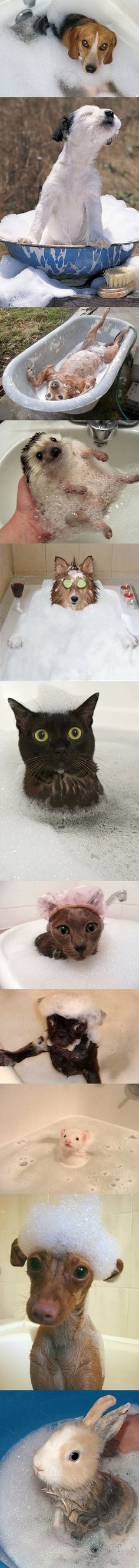 Cute Animals Taking a Bath..i only think the ferret and the hedgehog are cute though.