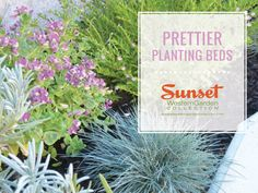 Been Thinking About Sprucing Up Your Landscape With A Few Plants From Sunset Western Garden Collection