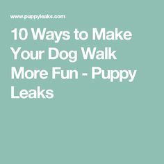 10 Ways to Make Your Dog Walk More Fun - Puppy Leaks
