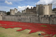 "Red ceramic poppies spill from the Tower of London in the installation ""Blood Swept Lands And Seas Of Red,"" to honor the British and Commonwealth soldiers killed in World War I."