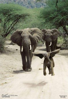 Dumbo!  What a cute little guy!