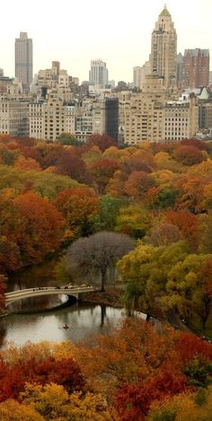 Central Park, New York City by jenniferET