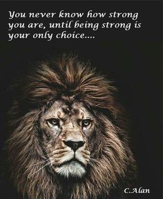 The wicked flee though no one pursues, but the righteous are as bold as a lion. Leo the Lion Citation Lion, Beautiful Creatures, Animals Beautiful, Beautiful Lion, Animals And Pets, Cute Animals, Wild Animals, Lion Quotes, Quotes Quotes