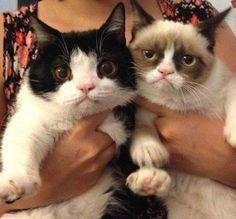 Pokey and Grumpy Cat