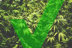 marijuana massachusetts yes