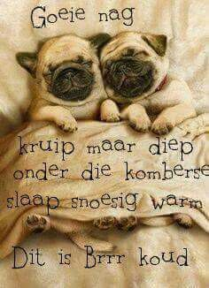 Goeie Nag. Good Night Wishes, Good Night Sweet Dreams, Good Morning Good Night, Good Knight, Afrikaanse Quotes, Goeie Nag, Angel Prayers, Photo Transfer, Inspirational Quotes