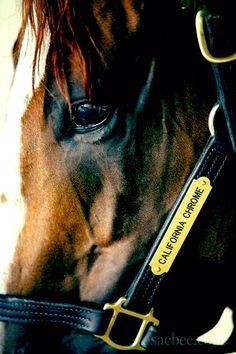 Kentucky Derby Contender California Chrome
