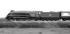 Railway Photography, Steam locomotive, LNER 'Bittern' panned at Ashchurch Time Travel Machine, Steam Railway, Train Times, Railway Museum, British Rail, Steamers, Melting Pot, Train Set, Steam Engine