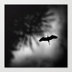 The flight Canvas Print by kostaspavlis Fine Art Prints, Canvas Prints, Latest Generation, Black And White, Artist, Photo Canvas Prints, Black N White, Art Prints, Black White