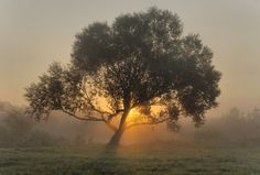 """""""Grace comes into the soul, as the morning sun into the world; first a dawning, then a light; and at last the sun in his full and excellent brightness."""" ~Thomas Adams (Photo via Sunrise by Appreciate Life, Sunrise Sunrise, Sunset, The Shepherd, Morning Sun, Meditation, In This Moment, Beautiful Scenery, World"""