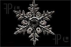 Snowflake http://www.featurepics.com/helpcenter/LicenseRoyaltyFree.aspx