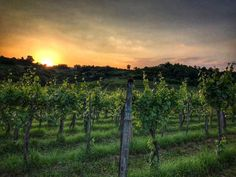 #magic #sunset #fantinel #feeltheemotion #vineyard #nature #italy #Friuli #hills #landscape #colours #winelovers #wineoclock #picoftheday