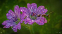 The ant and the flowers by chabaudyohann on 500px