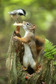 Get off it's my Mushroom?