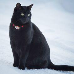 サイズ調節可能な可愛いボタン付き猫の首輪チョーカータイプ【定形外送料無料】C-0001 | ハンドメイドマーケット minne
