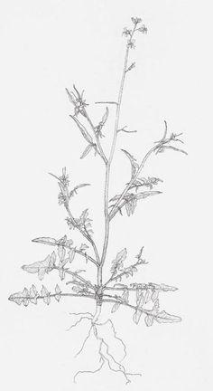 """""""weed drawings"""" Michael Landy"""