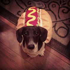 Oscar Meyer the Weiner Dog Oscar Mayer, Weiner Dogs, Dachshunds, Chihuahua, Pitbulls, Cute Animals, Pets, Dachshund Dog, Pretty Animals