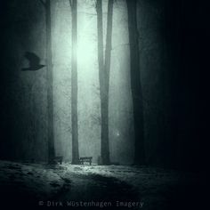 sad day #sad #mist #trees #winter #flyingbird #dark #mood