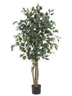 Parkes Silk Ficus Tree in Planter & Reviews | AllModern