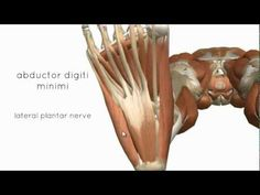 Foot Anatomy 02   3D anatomy tutorial on the intrinsic muscles of the foot
