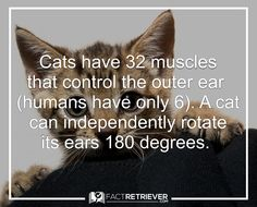 Cats can actually hear much higher frequencies than dogs.