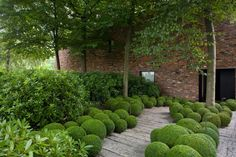 Boxwood Ball lined walkway in a semi formal garden Boxwood Garden, Topiary Garden, Garden Pool, Modern Landscaping, Landscaping Plants, Formal Gardens, Outdoor Gardens, Low Maintenance Garden, Garden Architecture