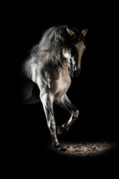 Gorgeous horse dancing in the shadows. Carpe Diem