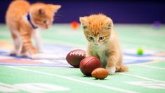 #KittenBowl II on @HallmarkChannel is the cutest showdown in history & the purrrfect recipe for fun! Tune in on Feb. 1!