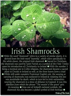 Irish Shamrocks: some say St. Patrick didn't technically introduce Ireland to Christianity, since Christianity was in Ireland for quite some time before his arrival. He is, however, credited with bringing Christianity to Ireland on the large scale that we Wales, Irish Quotes, Irish Sayings, Irish Proverbs, Irish Culture, Celtic Culture, Irish American, American Women, Viajes