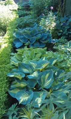 Garten-Grenzideen - New ideas Outdoor Landscaping, Outdoor Plants, Outdoor Gardens, Shade Garden Plants, Hosta Plants, Back Gardens, Small Gardens, Garden Yard Ideas, Woodland Garden