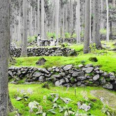 【yu_fujiwara56】さんのInstagramの写真をピンしています。《『癒しの森の緑 green of healing forest』 #森 #woods #木 #wood #林 #forest #苔 #moss #カフェ #cafe #癒し #healing #日本 #japan #愛媛 #西予 #宇和 #緑 #グリーン #green #モノクロ #monochrome #モノトーン #monotone #白黒 #blackandwhite #フォーカス #focus #視点 #pointofview》