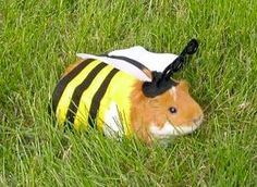 Animals in costume never get old