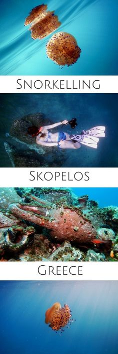 Snorkeling in Skopelos, Greece - A guide to travel in Alonissos in Greece: how to get there, where to stay, things to do... From volunteering to scuba diving, from snorkeling to cultural experiences, road-trips and city explorations, there is a plethora of things to do and experience in Alonissos. #underwater #underwaterphotography #uwpics #snorkeling #snorkel #snorkelingtrip #scubadiving #scubadive #greece #alonissos #travel #scubadivingtrips