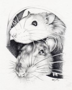 My sister's pet rats - Drawing by Gem Davis - gemdavis.co.uk