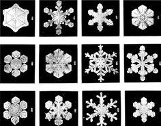 Una de las curiosas representaciones en las que volvemos a encontrar a Fi, es en la formación de los copos de nieve y su particular forma estrellada. ¿Pura casualidad? ¿O necesitamos más ejemplos para demostrar que muchos de los fenómenos naturales que ocurren se pueden explicar a base de las matemáticas?