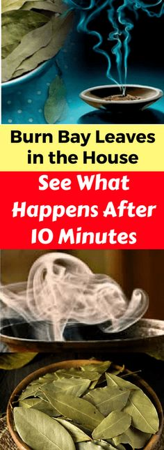 Burn Bay Leaves in the House and See What Happens After 10 Minutes - infacter