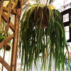 Diverse planten in PuiCk, koffie en lunch centrum Breda