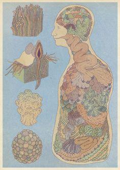 Katie Scott - Organs #illustration #anatomy /