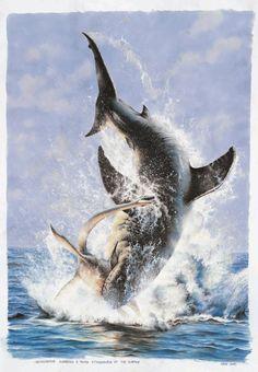 The Ginsu Mako, Cretoxyrhina, a giant shark from the Cretaceous Inland Seaway, ambushes a young elasmosaur, Styxosaurus, as the surface.