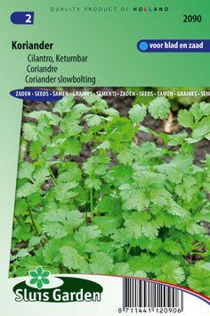 Semená byliniek : Semená, Koriander 2g ± 275 semien