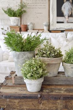 to do farmhouse decor decor gift ideas farmhouse decor decor mtl decor usa decor discount decor definition decor easter Succulent Centerpieces, Succulent Pots, Succulents Diy, Indoor Succulents, Garden Crafts, Garden Art, Paint Garden Pots, Deco Floral, Indoor Gardening