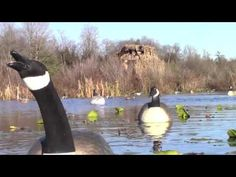what is waterfowl hunting