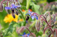 When you find a bee on a flower in a summer flower field. Happiness, easyness and joy.  bitte stimmt bei diesem Wettbewerb für mich ab ^^ ich freue mich über jede eurer Stimmen für das Foto bis zum 30.09.2016!!   #summertime #summer #bumblebee #honey #bee #bienen #biene #sommer #sommermoment #bloggerstyle #fashionflow #blogger #sunny #sunshine #flowers #blumen #blumenwiese #blume #natur #bildschirmschoner #sommer #sonnenschein #fotografie #tierfotographie #bieneblume