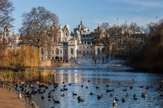 All sizes | Saint James's Park et ses canards | Flickr - Photo Sharing!