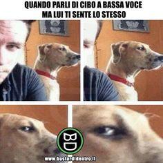 Pappa? Chi ha detto pappa? Tagga i tuoi amici e condividi le risate! #bastardidentro #cani #cibo #animali #cuccioli