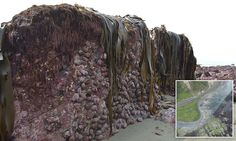 New Zealand's earthquake was so powerful the sea floor lifted TWO METRES and exploded through the sand - creating an alien landscape that has left marine experts baffled