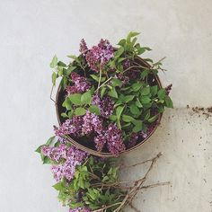 Lilacs, one of my absolute favorite flowers of all time.