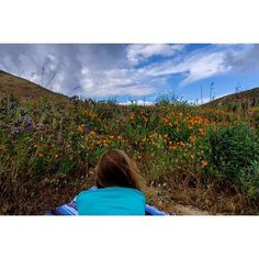California National, State, Regional & Local Parks - CaliParks California Poppy, Valley California, Local Parks, Park Photos, Park City, Regional, Poppies, Instagram, Poppy